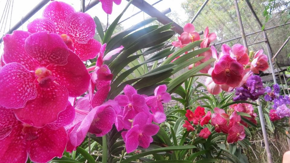Lifestyle Enthusiast - Thailand - Pinks and Purples, Flowers