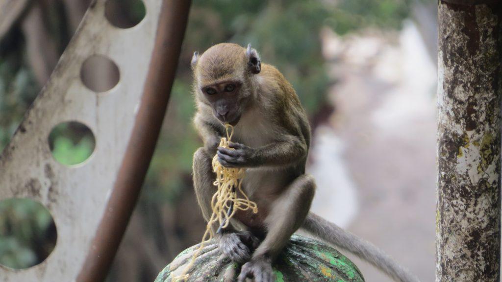 48 Hours in Kuala Lumpur (KL)_ Batu Caves Monkey_ Lifestyle Enthusiast