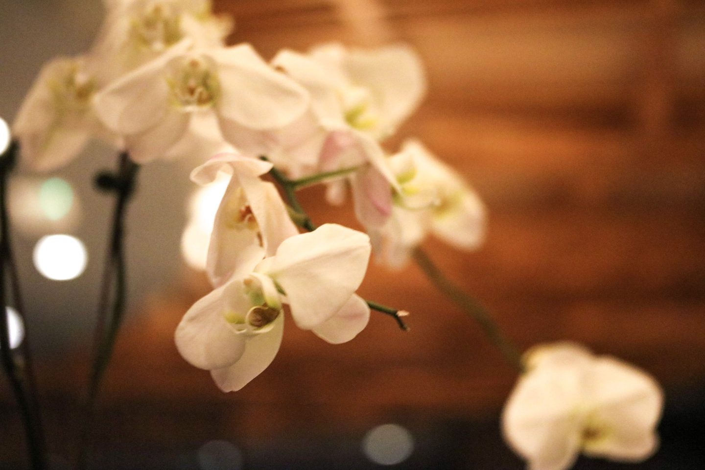 Dinner at Zengo Le Royal Meridien Dubai Flowers - Lifestyle Enthusiast blog