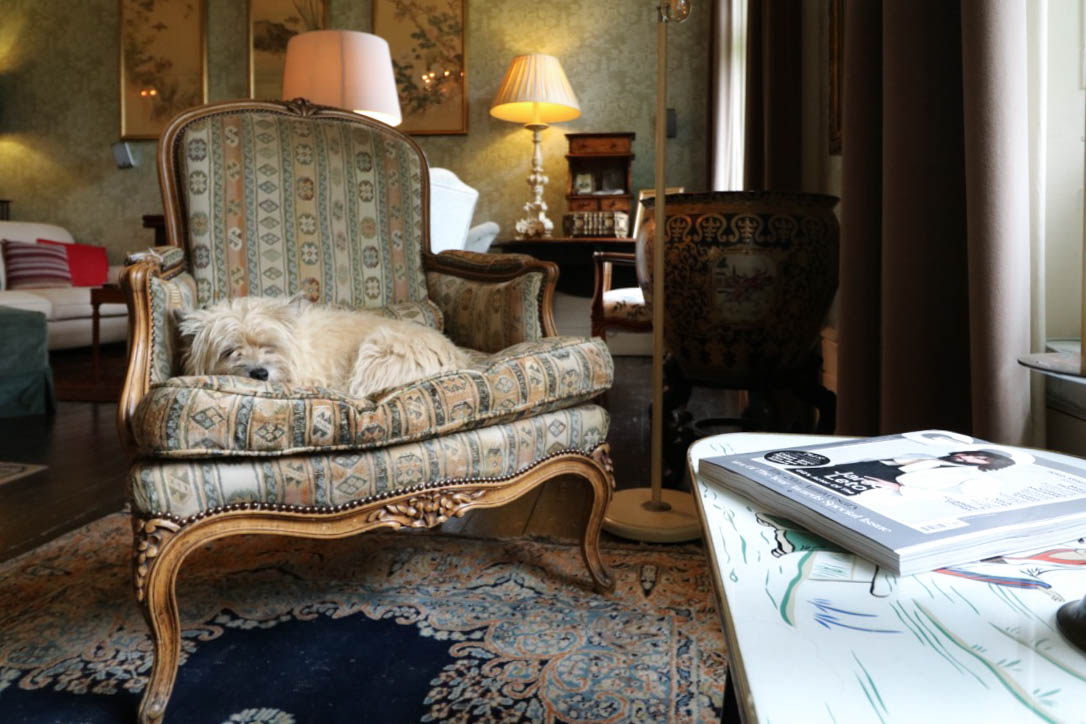 Ballyvolane House_Country Retreat in County Cork Ireland_ Dog snoozing in drawing room